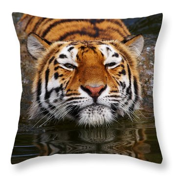 Portrait Of A Bathing Siberian Tiger Throw Pillow by Nick  Biemans