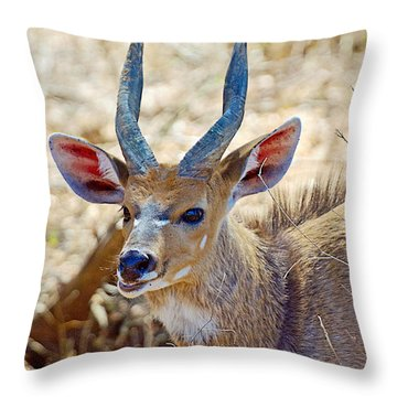 Portrait Of A Bushbuck In Kruger National Park-south Africa  Throw Pillow