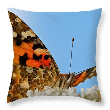 Portrait Of A Butterfly Throw Pillow by Nick  Biemans