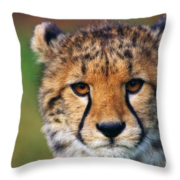 Throw Pillow featuring the photograph Portrait Of A Cheetah Cub by Nick  Biemans