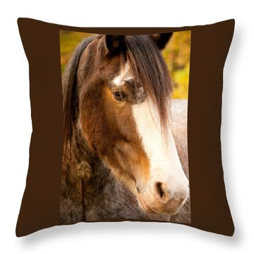 Portrait Of A Clydesdale Throw Pillow