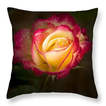 Portrait Of A Double Delight Rose Throw Pillow