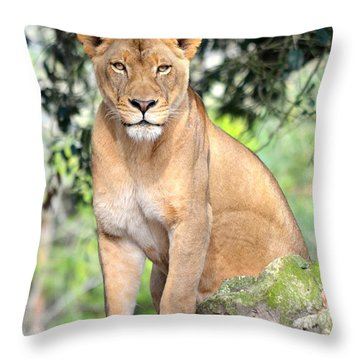 Portrait Of A Proud Lioness Throw Pillow