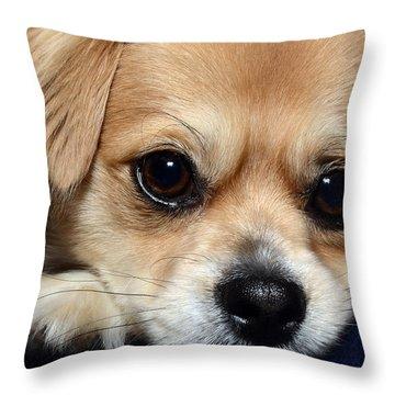 Portrait Of A Pup Throw Pillow by Lisa Knechtel