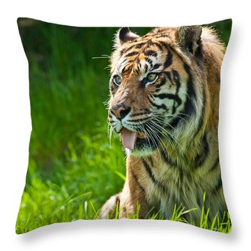 Throw Pillow featuring the photograph Portrait Of A Sumatran Tiger by Jeff Goulden