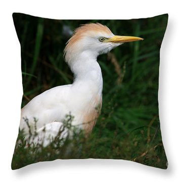 Portrait Of A White Egret Throw Pillow by Nick  Biemans