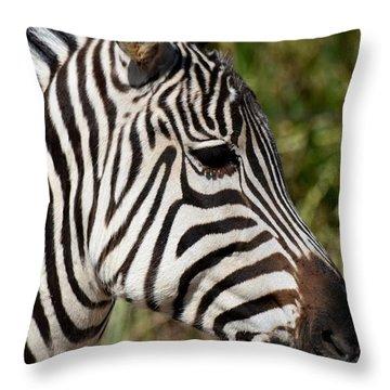Portrait Of A Zebra Throw Pillow by Maria Urso