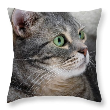 Portrait Of An Ameriican Shorthair Cat Throw Pillow by Amy Cicconi