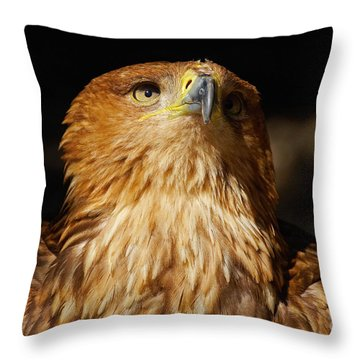 Portrait Of An Eastern Imperial Eagle Throw Pillow by Nick  Biemans