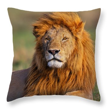 Portrait Of Lion Romeo II In Masai Mara Throw Pillow by Maggy Meyer