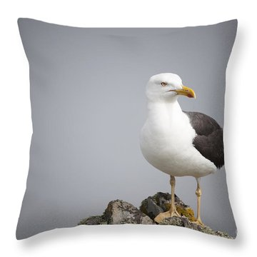 Posed Gull Throw Pillow by Anne Gilbert