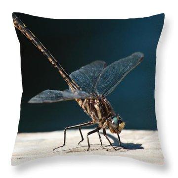 Posing Dragonfly Throw Pillow