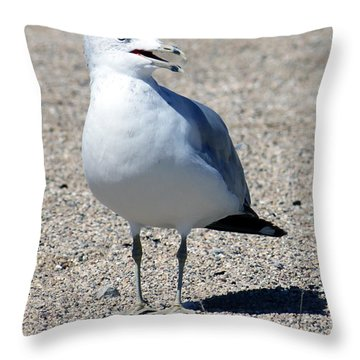 Throw Pillow featuring the photograph Posing Gull by Debbie Hart