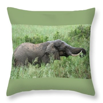 Post Mud Bath Appetite Throw Pillow