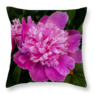 Powderpuff Peony Throw Pillow