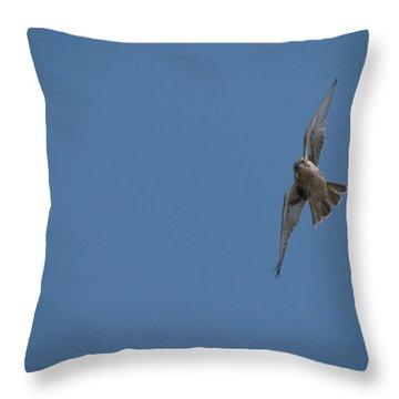 Prairie Diver Throw Pillow