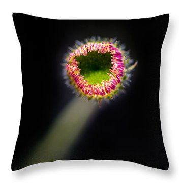 Prairie Fleabane Daisy Opening Throw Pillow