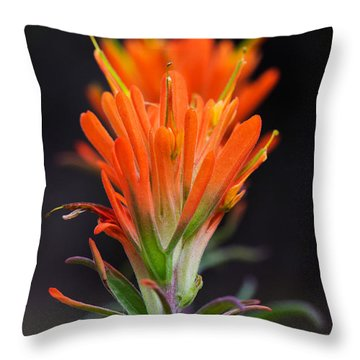 Prairie Paintbrush Flower Throw Pillow