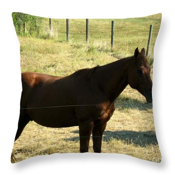Prarie Stallion In The Shade Throw Pillow by Barbara Griffin