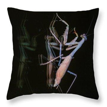 Praying Mantis 2 Throw Pillow by Angela A Stanton