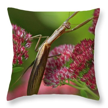 Praying Mantis Climbing Up Sedium Flower Throw Pillow by Inspired Nature Photography Fine Art Photography