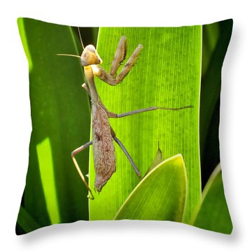 Throw Pillow featuring the photograph Praying Mantis by Kasia Bitner