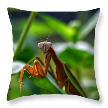 Throw Pillow featuring the photograph Praying Mantis by Thomas Woolworth