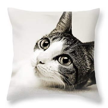 Precious Kitty Throw Pillow