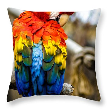 Preening Scarlet Macaw Throw Pillow