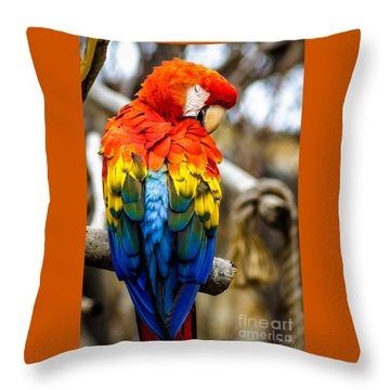 Preening Scarlet Macaw Throw Pillow