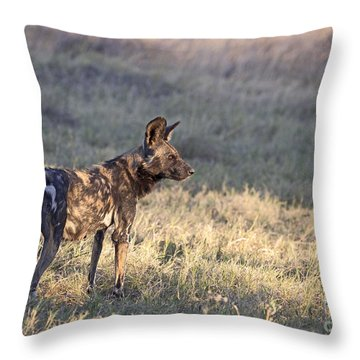 Throw Pillow featuring the photograph Pregnant African Wild Dog by Liz Leyden