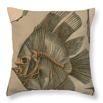 Prehistoric Fish Platax Altissimus Throw Pillow by Science Source