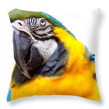 Throw Pillow featuring the photograph Pretty Bird by Roselynne Broussard