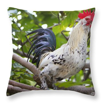Throw Pillow featuring the photograph Pretty Boy by Erika Weber