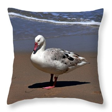 Throw Pillow featuring the photograph Pretty Goose Posing On Monterey Beach by Susan Wiedmann