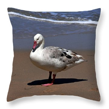 Pretty Duck Posing On Monterey Beach Throw Pillow