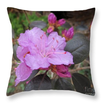 Pretty In Pink Throw Pillow by Arlene Carmel