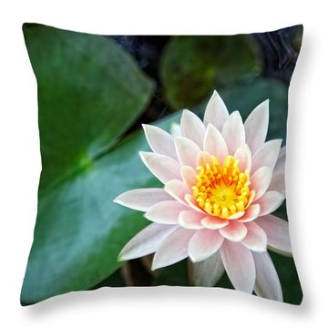 Pretty In Pink Throw Pillow by Dave Files