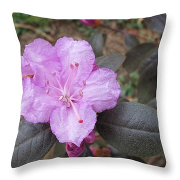 Throw Pillow featuring the photograph Pretty In Pink Four by Arlene Carmel
