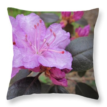 Throw Pillow featuring the photograph Pretty In Pink Three by Arlene Carmel