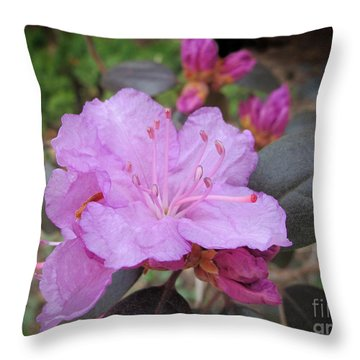 Throw Pillow featuring the photograph Pretty In Pink Two by Arlene Carmel