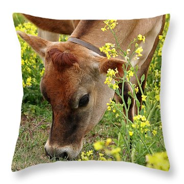 Pretty Jersey Cow Square Throw Pillow