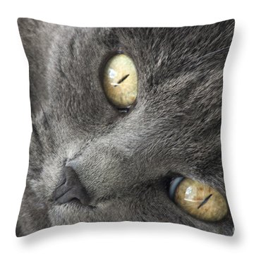 Pretty Kitty Eyes Throw Pillow by Darleen Stry