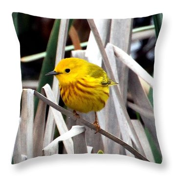 Pretty Little Yellow Warbler Throw Pillow by Elizabeth Winter