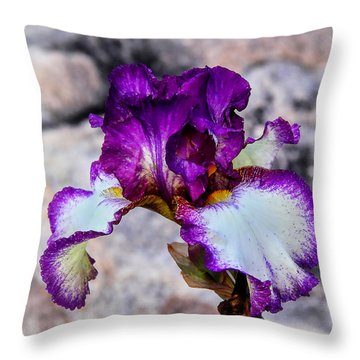 Pretty N Purple Throw Pillow