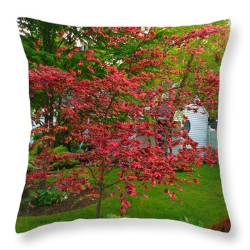 Throw Pillow featuring the photograph Pretty Pink Beech Tree by Becky Lupe