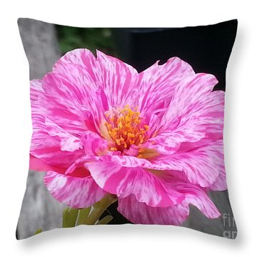 Pretty Pink Portulaca Throw Pillow by Donna Brown