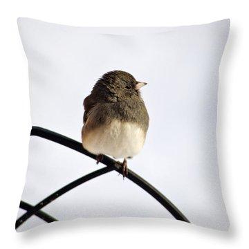 Pretty Winter Junco Throw Pillow by Christina Rollo