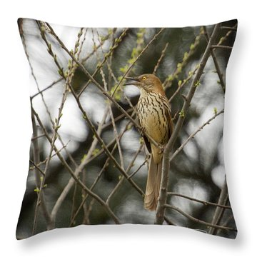Pride Of Georgia Throw Pillow by Cris Hayes