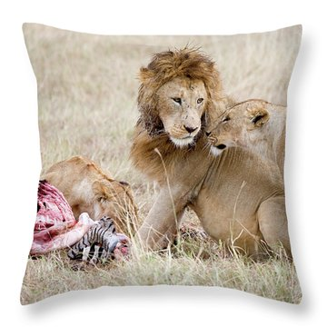 Pride Of Lions Panthera Leo Eating Throw Pillow